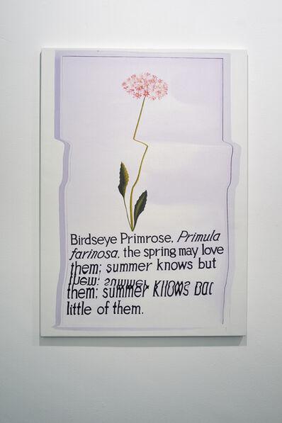 Jack Brindley, 'Birdseye Primrose', 2015