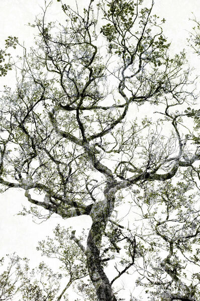 Santeri Tuori, 'Forest #27', 2016