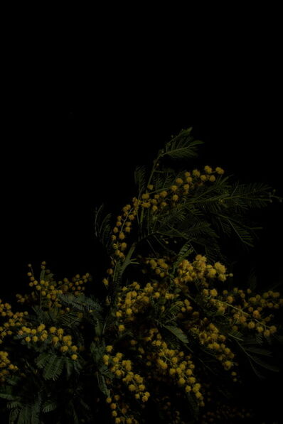 Giovanni Cocco, 'Plantarium Study n 13', 2019