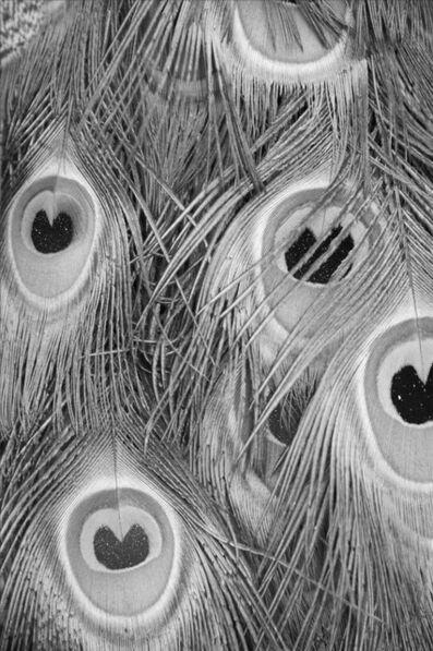 François Bucher, 'Untitled/ Que muera conmigo el misterio que está escrito en los tigres'
