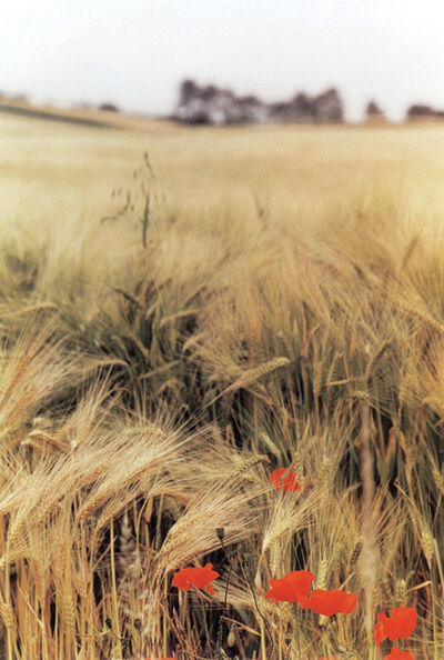 Ralph Gibson, 'Wheat Field, Burgundy', 1993