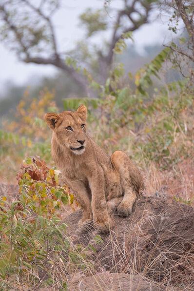 E.A. Kahane, 'Pride of Lions (Lion Club)', 2017