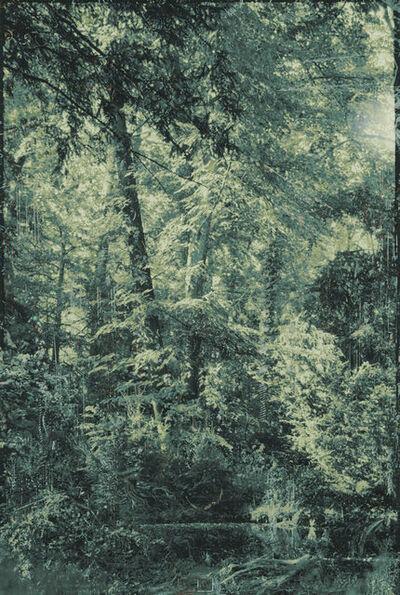 Aki Lumi, 'Garden No.15 花园 No.15', 2014