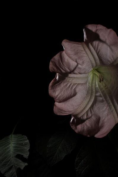 Giovanni Cocco, 'Plantarium 03', 2019