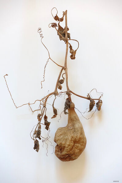 James Pitts, 'Dried Gourd', 2018