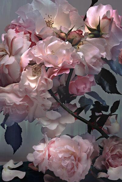 Nick Knight, 'Rose', 2008