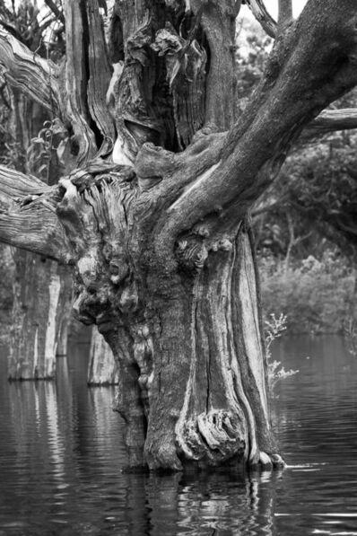 Araquém Alcântara, 'Carabinane Tree II, Jau National Park, Amazonas', 2015