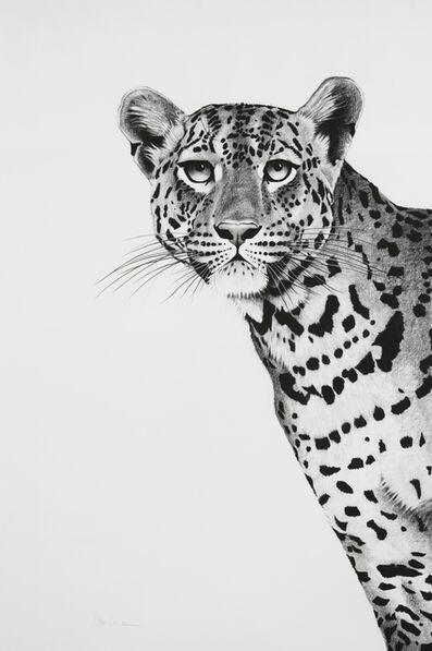 Rose Corcoran, '16. Leopard Peering', 2018