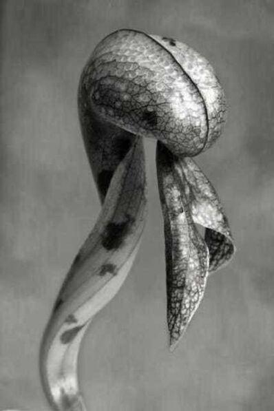 Beth Moon, 'Cobra Lily', 2008