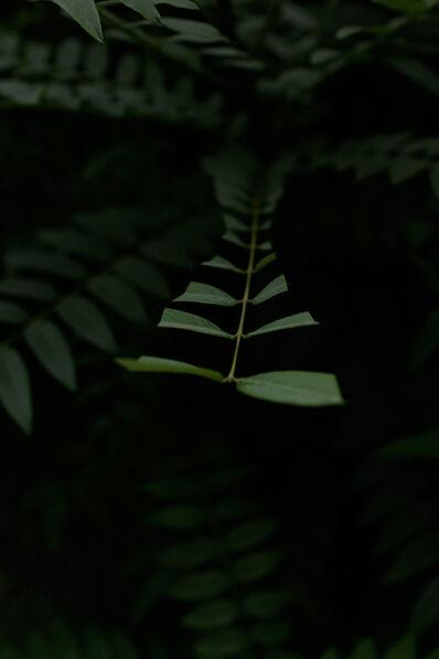 Ahram Park, ' Insomnia (Verde St, 0082)', 2019