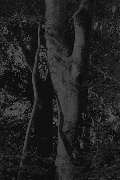 Daichi Koda, 'Forest 02', 2019