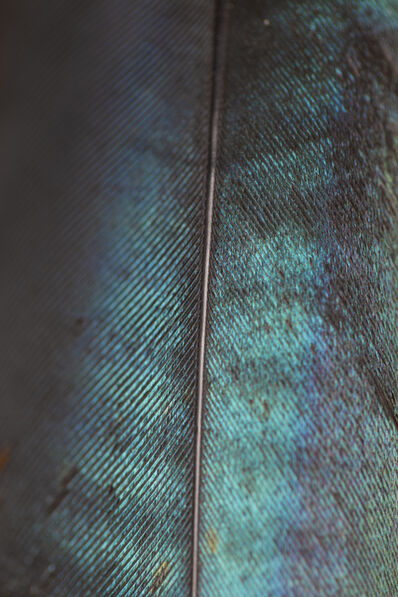 Steve Russell, 'Nature Unwrapped Blue - Glossy Starling Feather detail', 2019