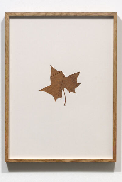 Amikam Toren, 'Hybrids (VIII)', 1978-1979