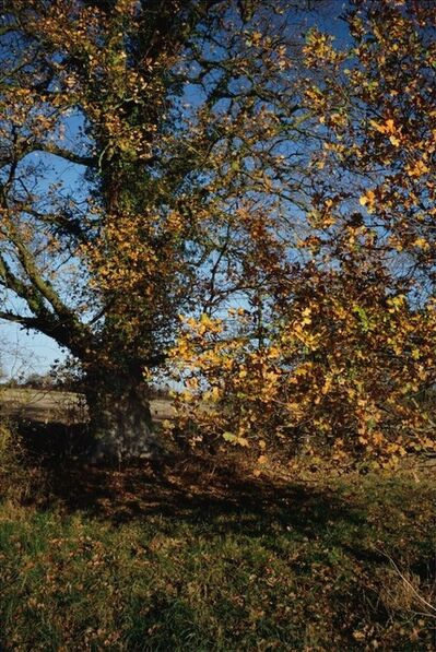 Justin Partyka, 'Oak, Suffolk (#2)', 2011