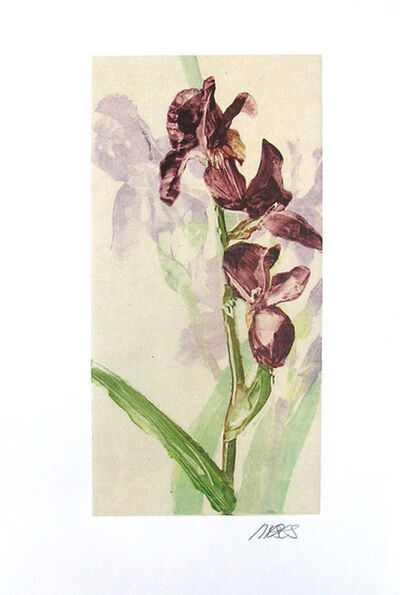 Forrest Moses, 'Untitled Iris', 20th century