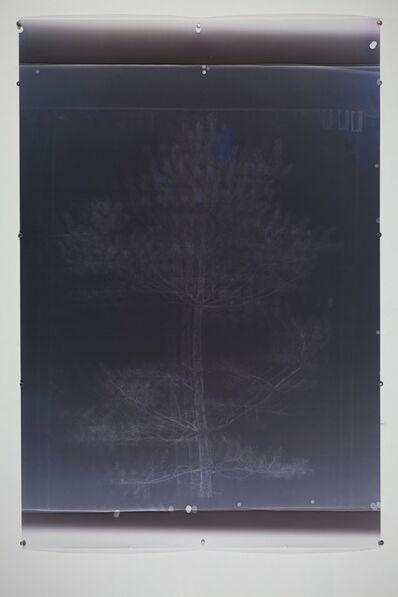 Marie Rief, 'Fichte - dreifache Belichtung ', 2014