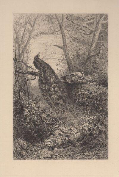 Karl Bodmer, 'Peacocks on a Branch', 1860