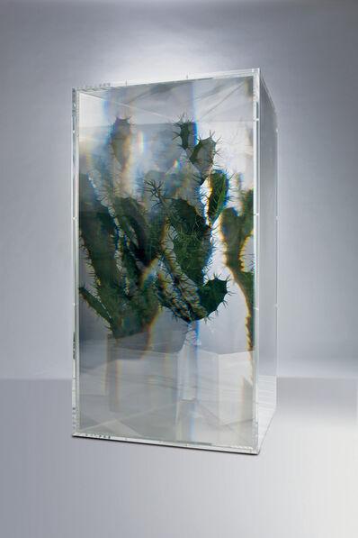Kohei Nawa, 'Pixcell: Cactus', 2008