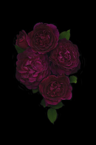 Mary Kocol, 'Five Deep Red Roses', 2016