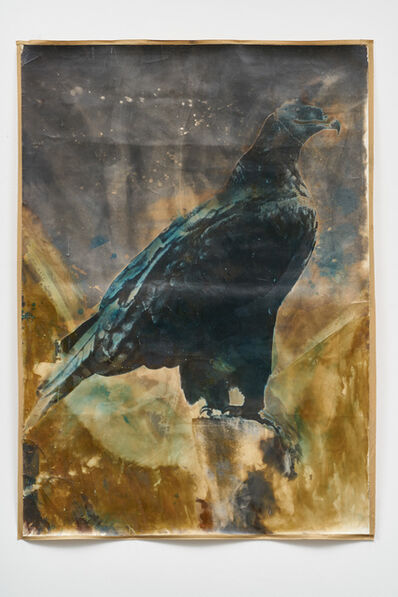 Johannes Brus, 'Steinadler (Golden Eagle)', 2008