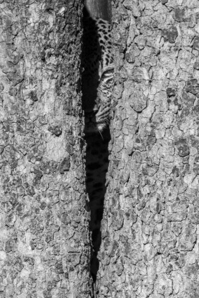 Harry Skeggs, 'Tow Face (Mono)', 2018