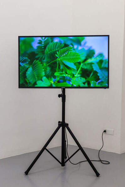 Pedro Neves Marques, 'The Pudic Relation Between Machine and Plant', 2016