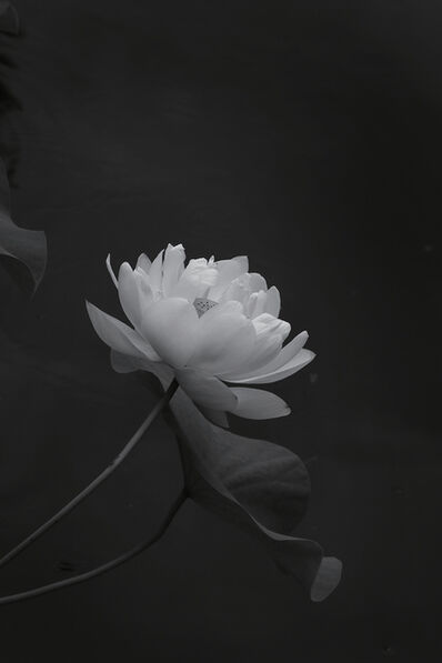 Tomohiro Muda 六田 知弘, 'Mizu 13 (Water 13)', 2013