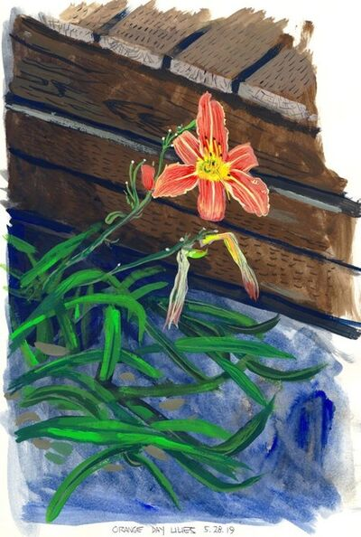 Cole Case, 'Orange Day Lilies 5.28.19', 2019