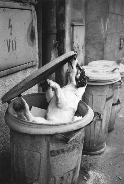 Juergen Teller, 'Der erfrorene Hund in der Mülltonne', 1993