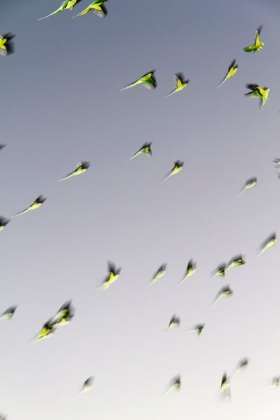 Yoshinori Mizutani, 'Tokyo Parrots 001', 2013