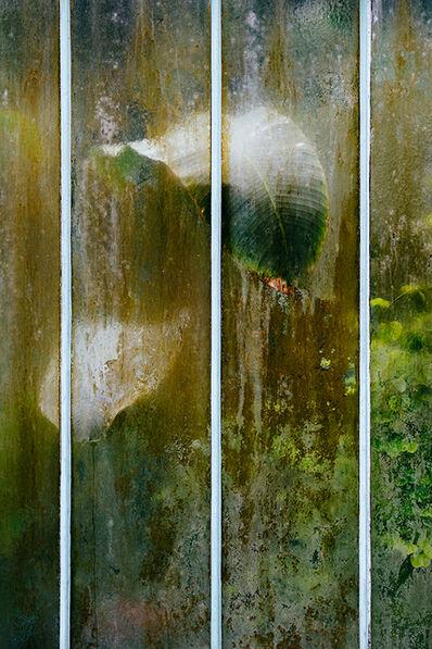 Samuel Zeller, 'Heliconia pendula', 2017