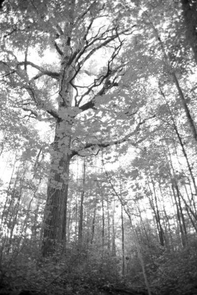 Kristi Lynn Tamcsin, 'Tree on White Oak Way', 2017