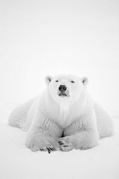 Paul Nicklen, 'Arctic Nomad'