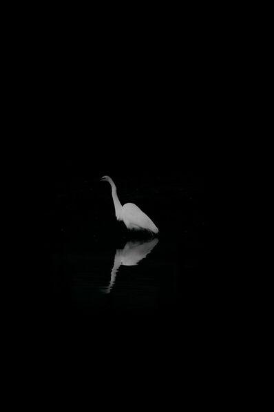 Jed Gallimore, 'MIRRORING BIRD', ND