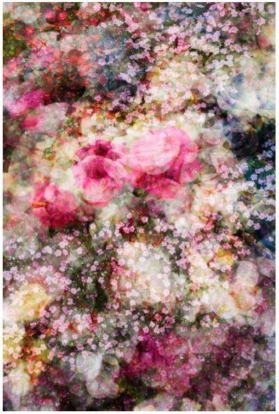David Burdeny, 'In Bloom 01, Kunming, China', 2019