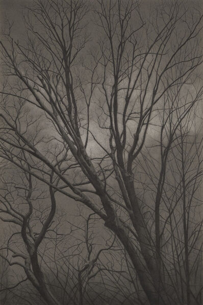 Mary Reilly, 'Wintry Trees 2', 2018
