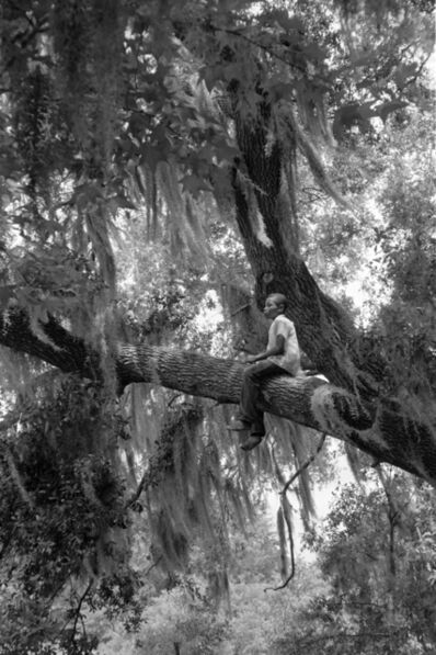 Constantine Manos, 'Untitled, Island Boy, Daufuskie Island, South Carolina (boy in tree)', 1952