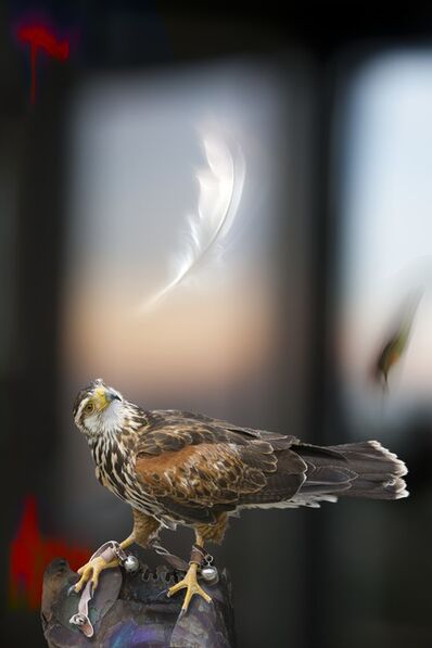 Olivia Parker, 'Falcon with Bells', 2012