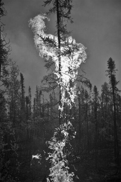 James Balog, 'Northwest Infrared #1, 2015', 2016