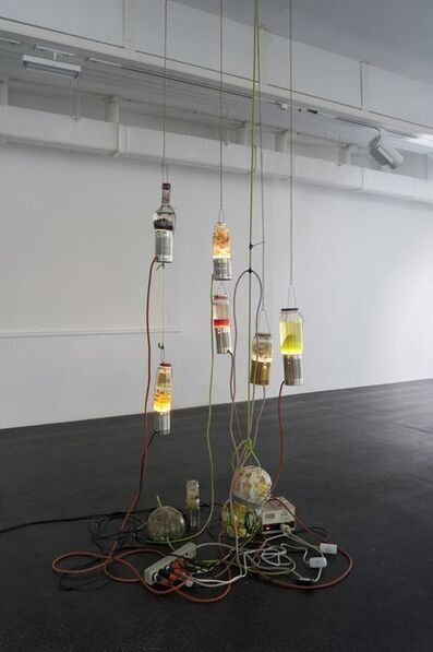 Catharine (Ahearn) Czudej, 'Lamps', 2014
