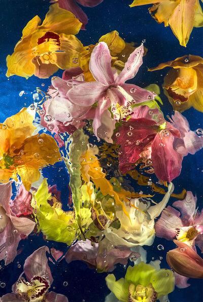 Allan Forsyth, 'Aqua Flora IX', 2016