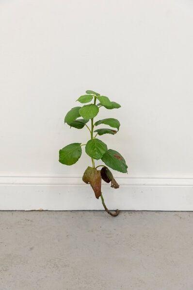 Tony Matelli, 'Weed 513', 2020