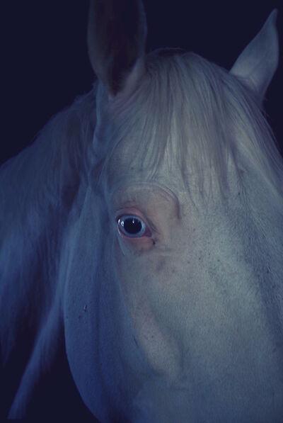 Ayline Olukman, 'Blue Eyed Horse', 2018