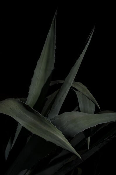 Giovanni Cocco, 'Plantarium 04', 2019