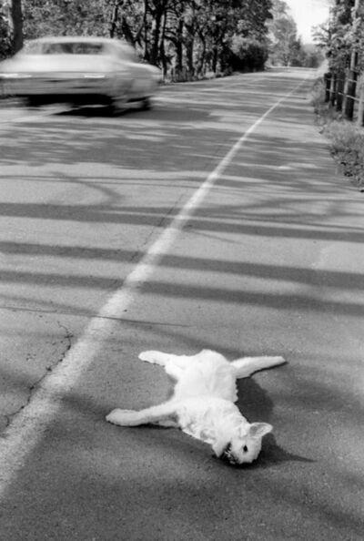 Roger Ballen, 'Dead Cat', 1970