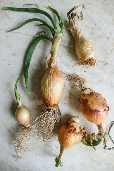 Karen Hirshan, 'Onions', 2018