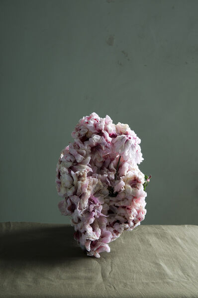 Sara Bjarland, 'Untitled 6 - from the series Plants', 2013