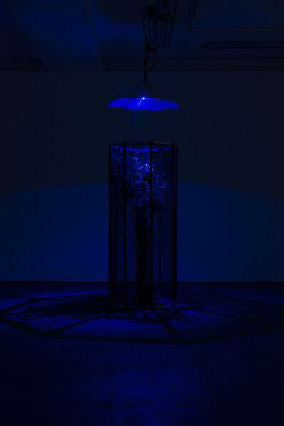 Hicham Berrada, 'Exhibition view Wentrup'