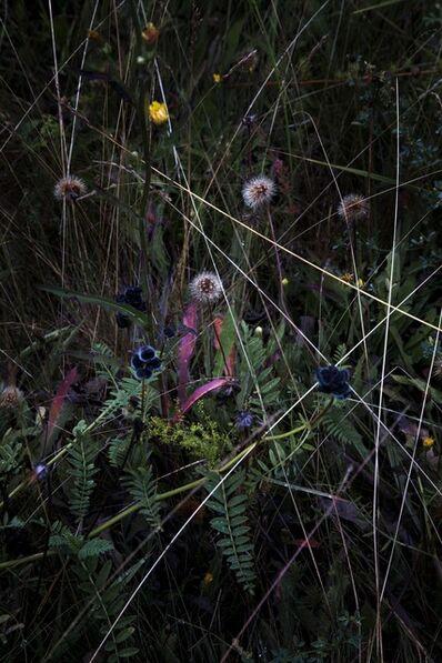 Elspeth Diederix, 'Grassland', 2015