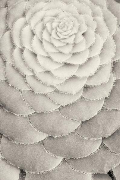 Cara Weston, 'Perfect Patterns, California', 2015